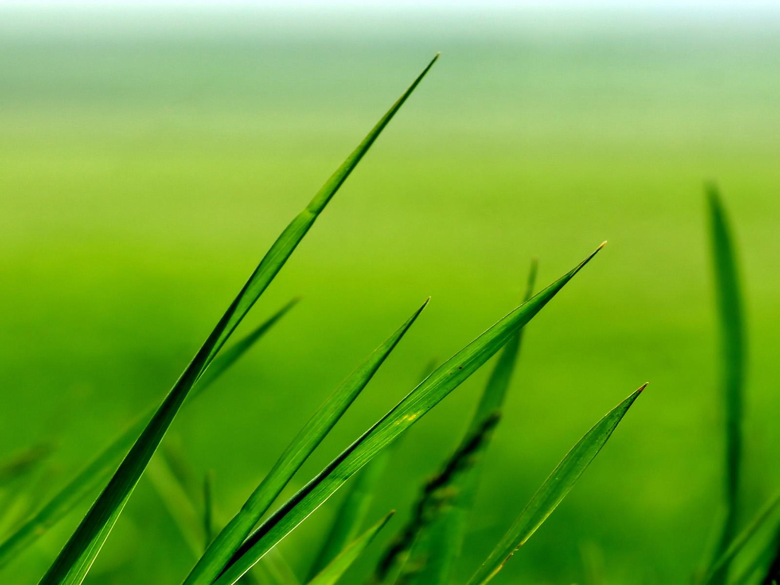 ...растений.  Неорон - контактный акарицид